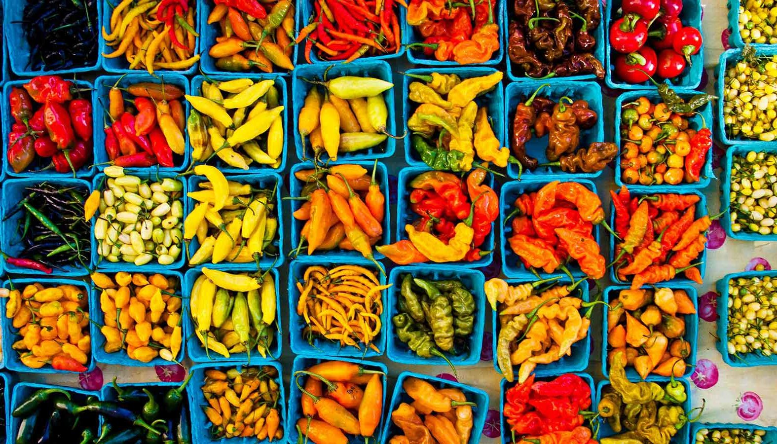 An overview of various chili peppers